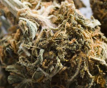 marijuanaw